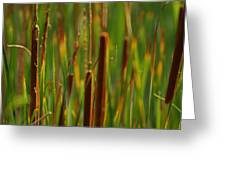 By The Lagoon Greeting Card