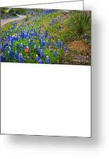Hill Country Yucca Greeting Card