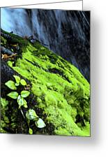 By The Waterfall Greeting Card