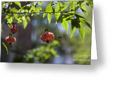 Red Papery Covering Over Its Fruit Greeting Card
