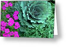 Cabbage And Vinca Greeting Card