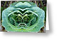 Cabbage Head Greeting Card