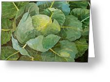 Cabbage Greeting Card