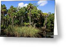 Cabbage Palms Along The Cotee River Greeting Card