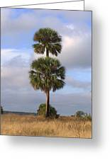 Cabbage Palms Greeting Card