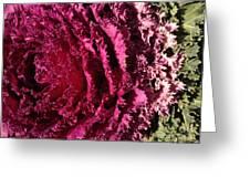 Cabbage Rainbow  Greeting Card