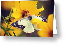 Cabbage White Greeting Card