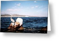 Cabo San Lucas Pelican Greeting Card