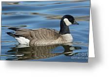 Cackling Goose Greeting Card