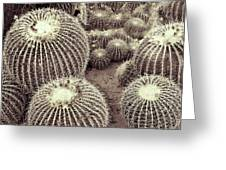Cacti Community Greeting Card