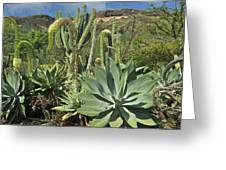 Cacti Of Koko Crater Greeting Card