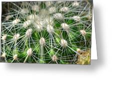 Cactus 1 Greeting Card