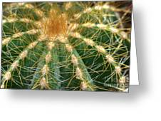 Cactus 2 Greeting Card