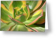 Cactus 4 Greeting Card