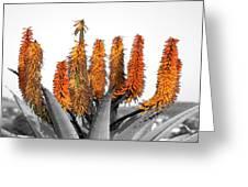 Cactus 5 Greeting Card