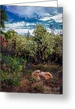 Cactus And Bird Greeting Card