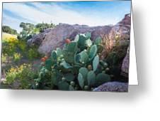 Cactus And Granite    9234 Greeting Card by Fritz Ozuna