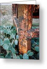Cactus And Rust Greeting Card
