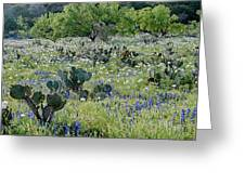 Cactus And Willow-wildflowers Of Texas Greeting Card