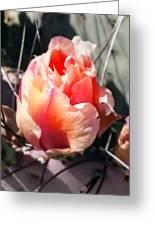Cactus Beauty Greeting Card
