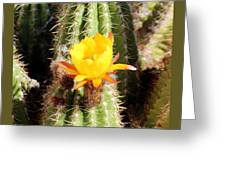 Cactus Bloom 033114a Greeting Card