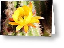 Cactus Bloom 033114e Greeting Card