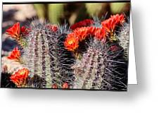 Cactus Bloom 033114g Greeting Card