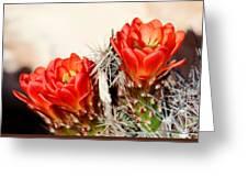 Cactus Bloom 033114m Greeting Card