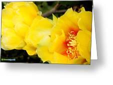 Cactus Bloom 1 Greeting Card