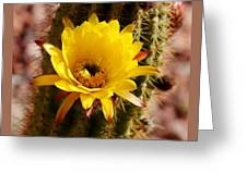 Cactus Bloom Yellow 050914a Greeting Card