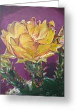 Cactus Blossom On Purple Background Greeting Card