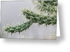 Cactus Branch With Wet White Long Needles Greeting Card