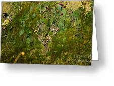 Cactus Buck Greeting Card