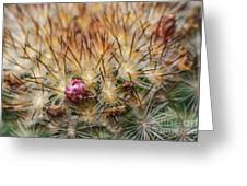 Cactus Bud Greeting Card