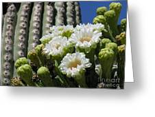 Cactus Budding Greeting Card