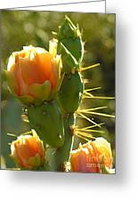 Cactus Buds Greeting Card
