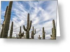 Cactus Choir Greeting Card