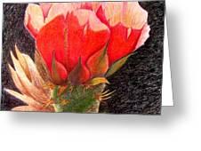 Cactus Cutie Greeting Card