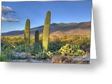 Cactus Desert Landscape Greeting Card