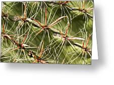 Cactus Diagonal Pattern Greeting Card