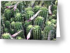 Cactus Drama Greeting Card