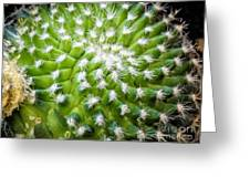 Cactus Feathers Greeting Card