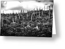 Cactus Field Greeting Card