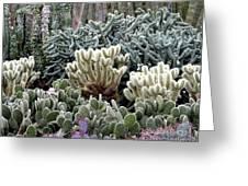 Cactus Field Greeting Card by Rebecca Margraf