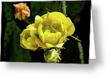 Cactus Flower 07-010 Greeting Card