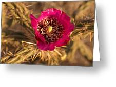 Cactus Flower 1 Greeting Card