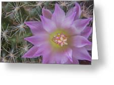 Cactus Flower #2 Greeting Card