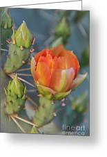 Cactus Flower And Buds Greeting Card