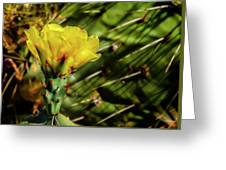 Cactus Flower H28 Greeting Card