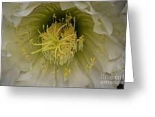 Cactus Flower Macro Greeting Card